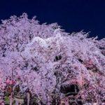 【2019年】六義園の桜!ライトアップや見ごろ時期は?混雑を避ける方法についても紹介!