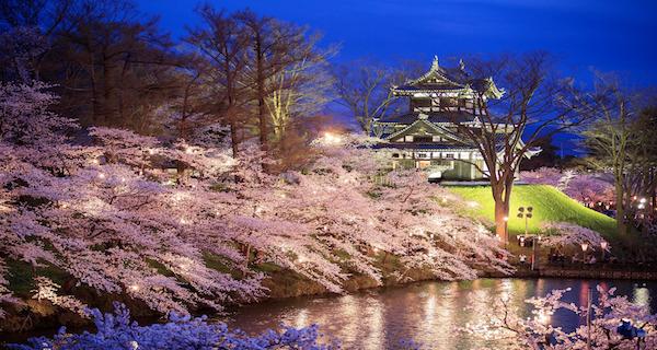【2019年】高田公園の桜!ライトアップ時間は?見頃や開花状況、駐車場についても紹介!